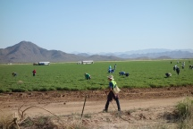 Large valley of irrigated squash with migrant workers in Sonoran desert along highway 60
