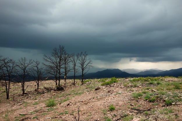 Forest fire damage near the headwaters of the Arkansas river