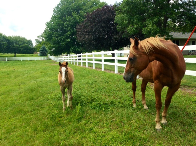 Curious mom and her foal in Prescott Iowa
